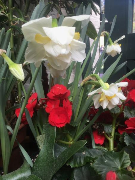 Biltmore Conservatory flowers